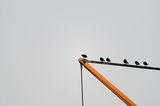 Джими, не скачай! ; comments:3