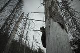 the dead forest ; Comments:9