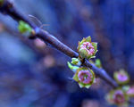 Синьо пролетно здравей ; comments:56