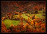 Нещо цветно и есенно ; comments:48