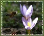 пролет пукна ; Comments:4
