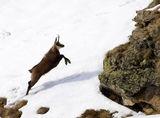 Скокът на мъжкаря ; comments:36