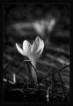 Черно бяла пролет ; comments:27