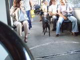 по-удобно е с трамвая ; comments:11