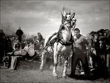 Уморените коне ги убиват - нали? /2/ ; comments:38
