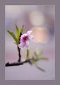 ..eх пролет, пролет. ; comments:30