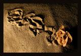 Пустинна роза ; comments:35