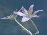 Пролетна импресия ; comments:84