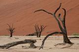 долината на Умрелите ; comments:35