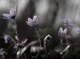 Пролетно тайнство-3 ; comments:45