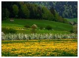 Пролет в Швейцария ; comments:69