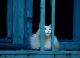 За котките и свободата! ; comments:50