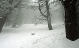 в мъглите гоним се със зимата ; comments:7