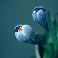 Blue ; Comments:21