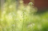 пролетни бокета 3 ; Comments:14