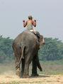 Chitwan(Nepal) ; Comments:13
