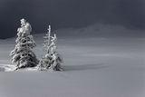 Зима ; Коментари:34