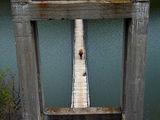 портрет в бетонна рамка ; comments:6