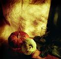 плод-зеленчук ;P ; comments:23