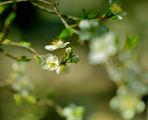 Пролет ; Comments:10