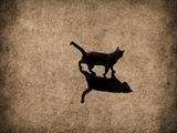 През деня всички котки са... ; comments:58