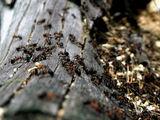 История с мравки ; comments:26
