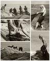 Рибарски хроники (3) ; Коментари:31