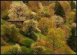 родопски пролетни зарисовки ; comments:55