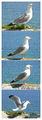 За чайките... и скуката ; Comments:4