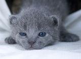 Коте бебе ; comments:12