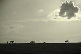 Пастирката ; comments:18