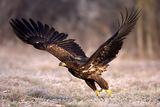 lets fly ; Коментари:27