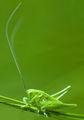 ..зеленикаво в цял ръст.. ; comments:29
