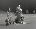 Зима ; Коментари:32