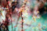 пролетни бокета 4 ; Comments:20