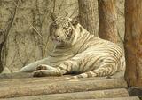 Beijing zoo ; comments:23