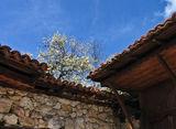 Пролет в Копривщица ; comments:41
