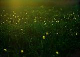 за пеперудите и приказките... ; comments:24