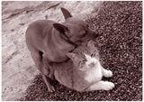 Кучи и Коти ; comments:22