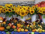 Есен, есен - отминал сезон...... ; comments:13