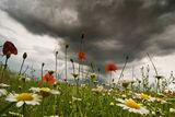 Издиханието на пролетта........ ; comments:62