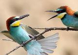 И при птичите двойки има несъгласия  .. ; comments:37