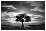 Между небето и земята #2 ; comments:66