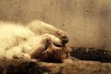 За всички котколюбители! ; comments:25