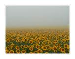 Хиляди слънца.... ; Comments:45