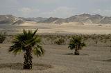 В пустинята ; comments:53