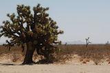 Joshua tree ; Comments:2