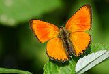 Оранжево.... ; comments:14