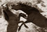 диви коне ; comments:121