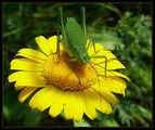 Това жълто цвете е мое ; comments:13